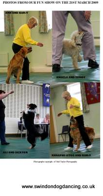 fun dog show photos picture 1