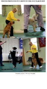 fun-dog-show-photos-picture-1
