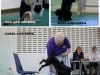 fun dog show photos picture 2